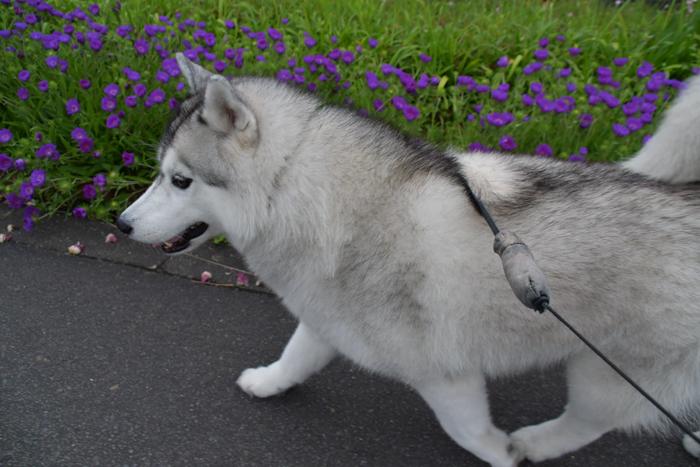 ジロちゃんとふれあい散歩 (*^_^*)_c0049299_21433347.jpg