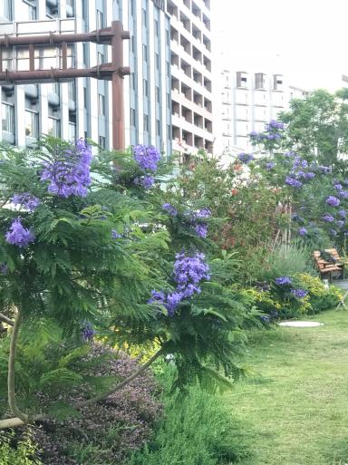 初夏の熱海はお花がいっぱい_f0101201_19242064.jpg