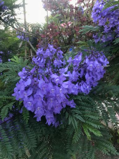 初夏の熱海はお花がいっぱい_f0101201_19242694.jpg