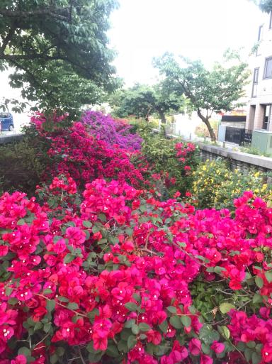 初夏の熱海はお花がいっぱい_f0101201_19280725.jpg