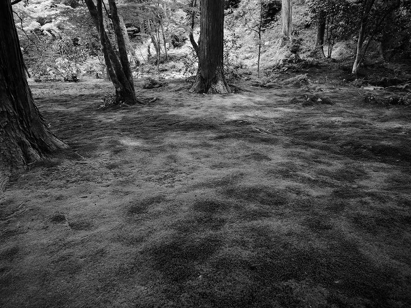 苔むした庭を歩く 続き_e0374932_06272968.jpg