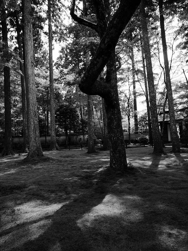 苔むした庭を歩く 続き_e0374932_06275020.jpg