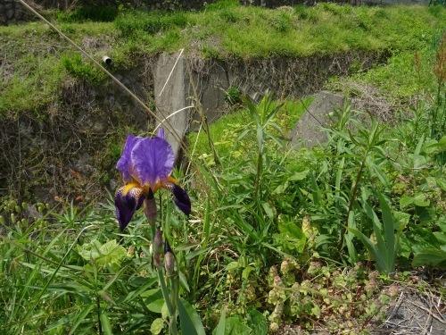 春の里山歩きと山菜とり_e0008880_00105770.jpeg