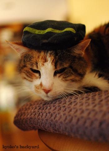 Sandyのソックス帽子_b0253205_06410781.jpg