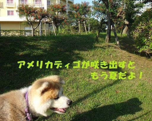 f0121712_15034304.jpg