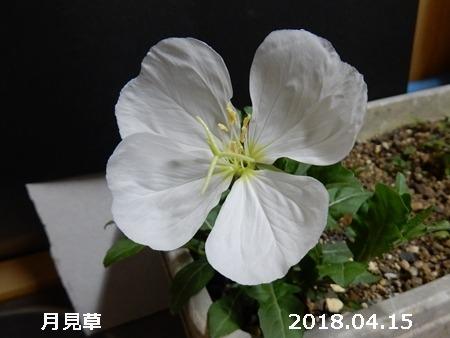 e0033229_1833367.jpg