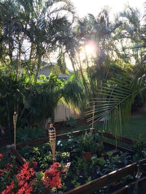 家庭菜園_e0022439_18551868.jpg