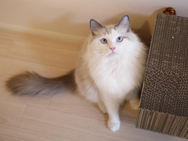 猫のお留守番 小石丸くん編。_a0143140_22081814.jpg