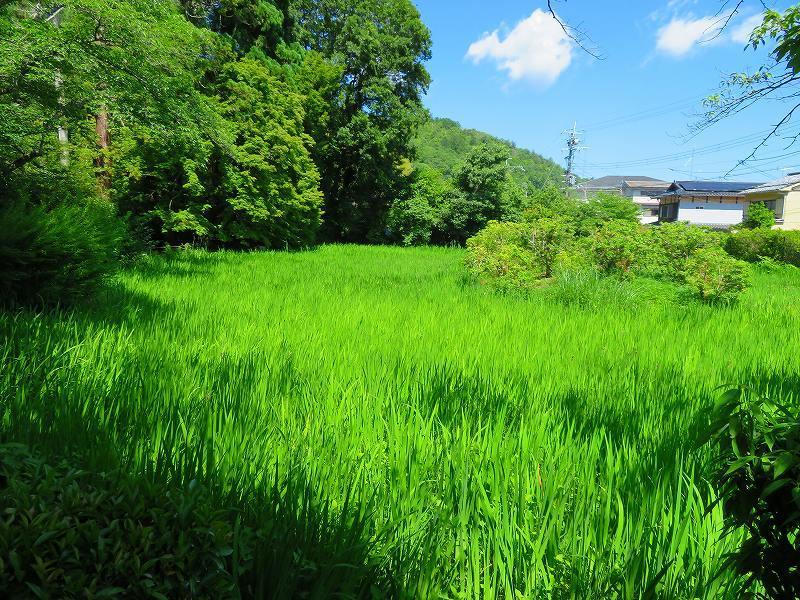 上賀茂神社社家町と大田神社20180601_e0237645_21570933.jpg