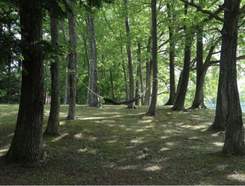 ゆと森倶楽部、早起きして森のお散歩♪_f0207146_18140299.jpg