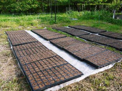 無農薬・無化学肥料で育てる「菊池水源産エゴマ」 平成30年度の栽培スタート!播種と発芽の様子_a0254656_18185039.jpg