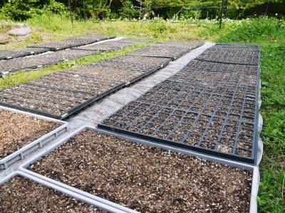 無農薬・無化学肥料で育てる「菊池水源産エゴマ」 平成30年度の栽培スタート!播種と発芽の様子_a0254656_18414154.jpg