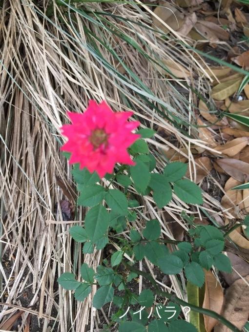 街の植物_b0093660_07345696.jpeg