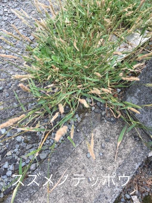街の植物_b0093660_07364658.jpeg