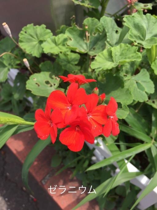 街の植物_b0093660_07370324.jpeg