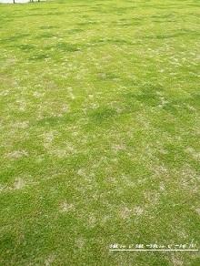 ズボラー、初の芝生管理に挑む。_f0368691_11065757.jpg