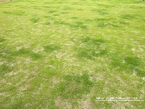 ズボラー、初の芝生管理に挑む。_f0368691_11074217.jpg