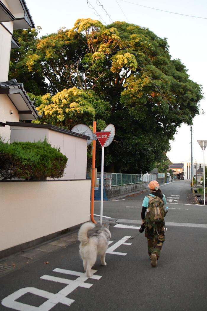 盛り沢山のお散歩だー (^o^)_c0049299_17454050.jpg