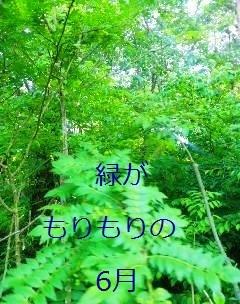 b0200310_18132233.jpg