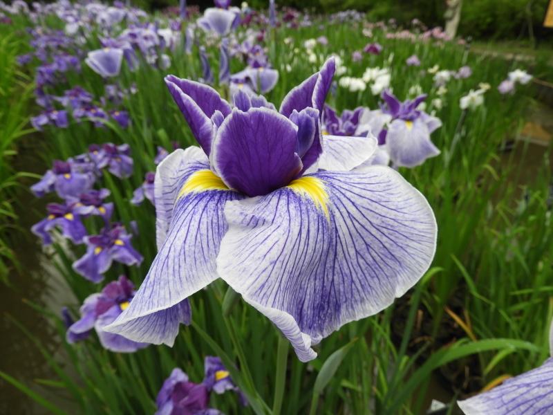 京都府立植物園 夏花の盛り2_e0048413_22022045.jpg