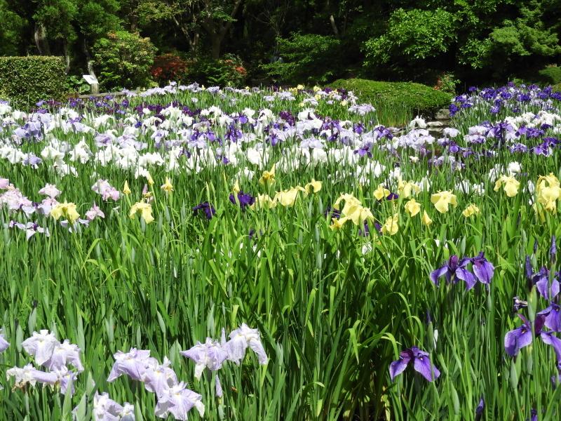京都府立植物園 夏花の盛り2_e0048413_22024650.jpg