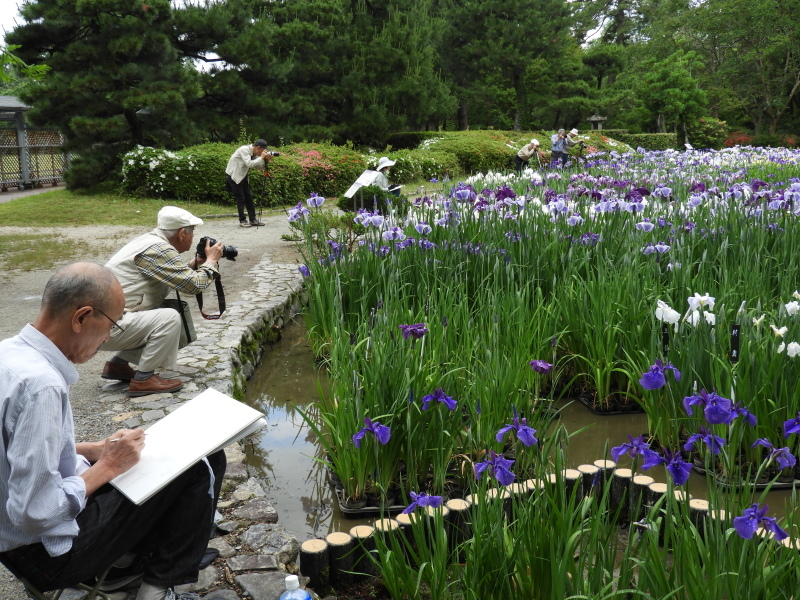 京都府立植物園 夏花の盛り2_e0048413_22031057.jpg