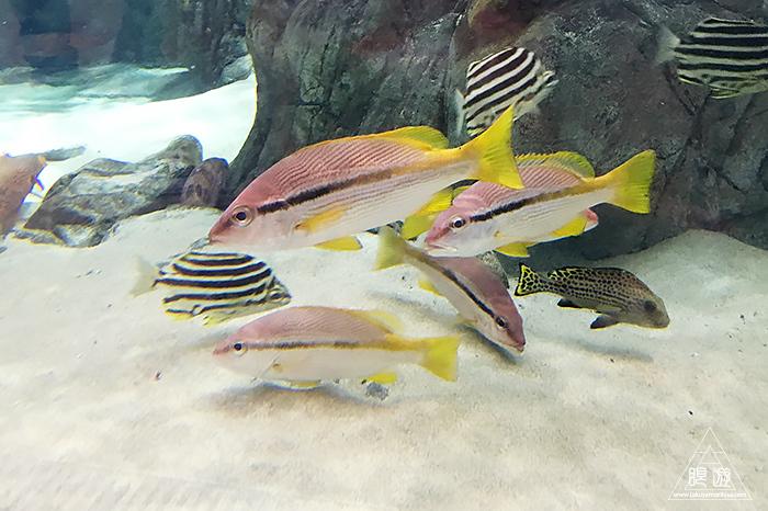 580 しまね海洋館アクアス ~島根の水族館~_c0211532_18402061.jpg