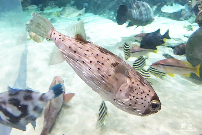 580 しまね海洋館アクアス ~島根の水族館~_c0211532_19095132.jpg