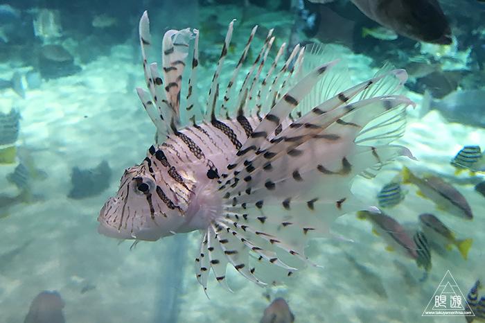 580 しまね海洋館アクアス ~島根の水族館~_c0211532_19095160.jpg