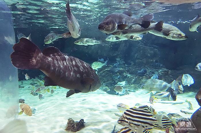 580 しまね海洋館アクアス ~島根の水族館~_c0211532_19095227.jpg