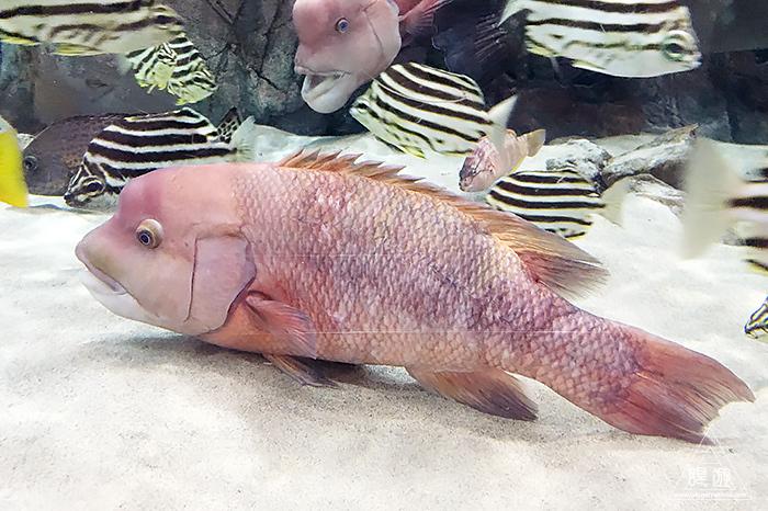 580 しまね海洋館アクアス ~島根の水族館~_c0211532_19095271.jpg