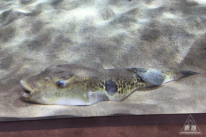 580 しまね海洋館アクアス ~島根の水族館~_c0211532_19095280.jpg