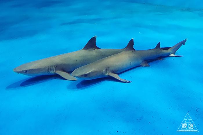 580 しまね海洋館アクアス ~島根の水族館~_c0211532_21584406.jpg