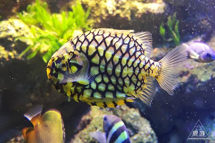 580 しまね海洋館アクアス ~島根の水族館~_c0211532_21584498.jpg