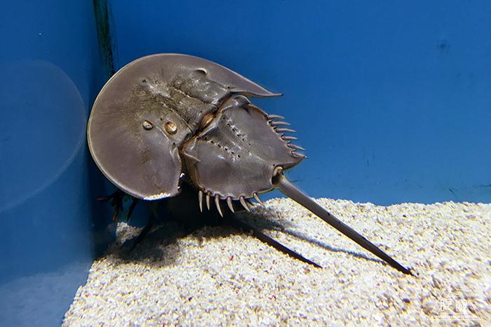 580 しまね海洋館アクアス ~島根の水族館~_c0211532_23263642.jpg