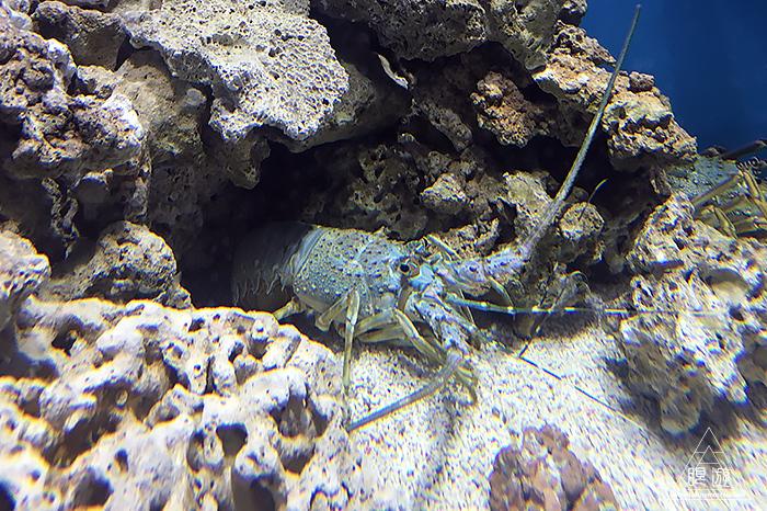 580 しまね海洋館アクアス ~島根の水族館~_c0211532_23263643.jpg