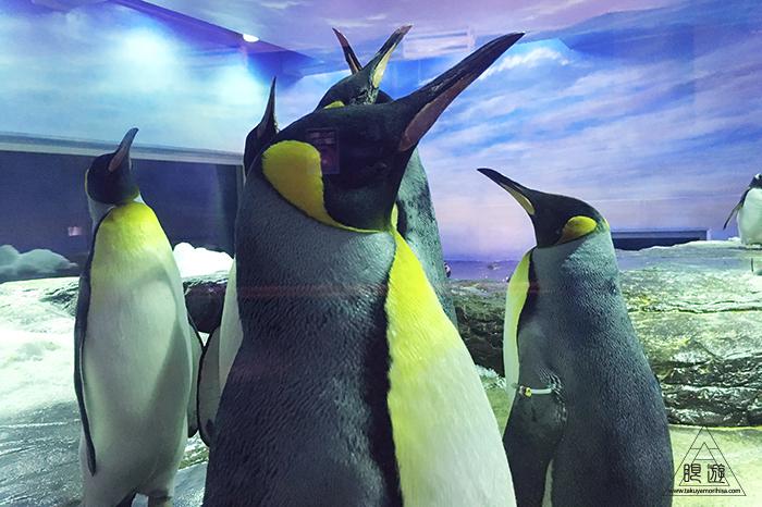 580 しまね海洋館アクアス ~島根の水族館~_c0211532_23350012.jpg
