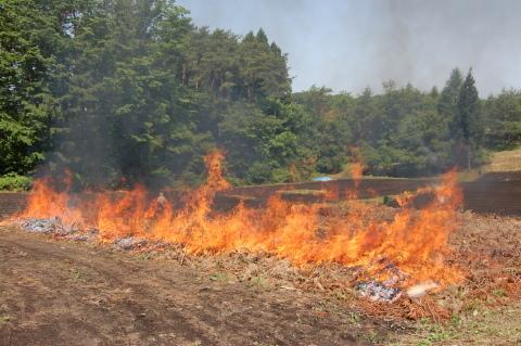 南郷地区の焼畑農法を体験してきました!_e0132433_16260506.jpg