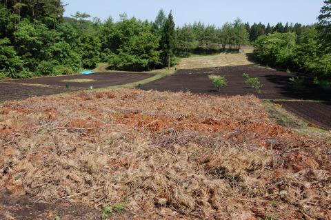 南郷地区の焼畑農法を体験してきました!_e0132433_16354472.jpg