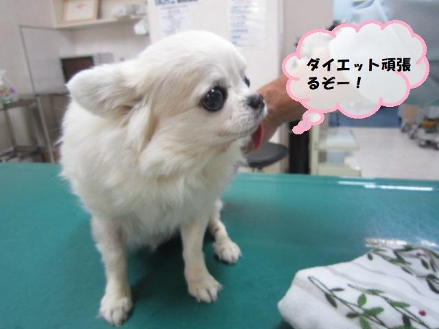 【心臓と肺水腫】_b0059154_12420090.jpg