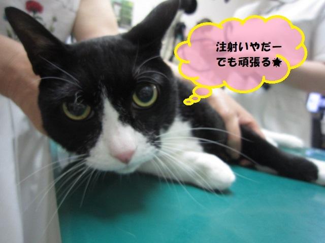 【ネコの大動脈塞栓症】_b0059154_15354264.jpg