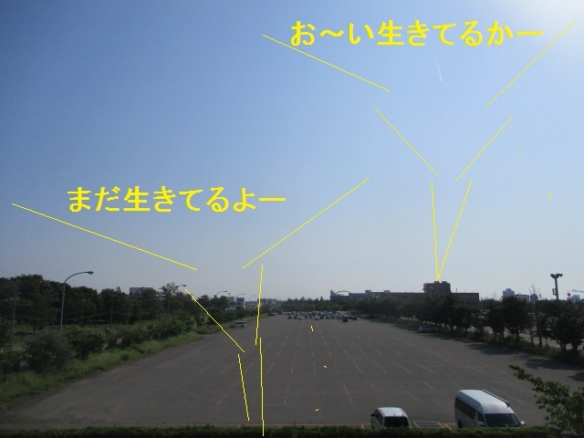 c0080863_20151592.jpg