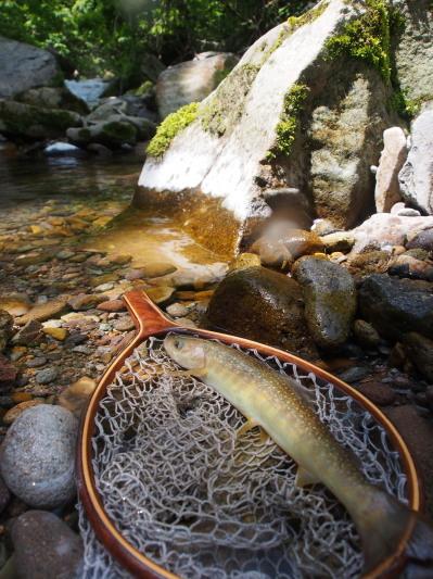 2018  庄川釣行、ライズを釣りあがる。_c0197578_08444329.jpg