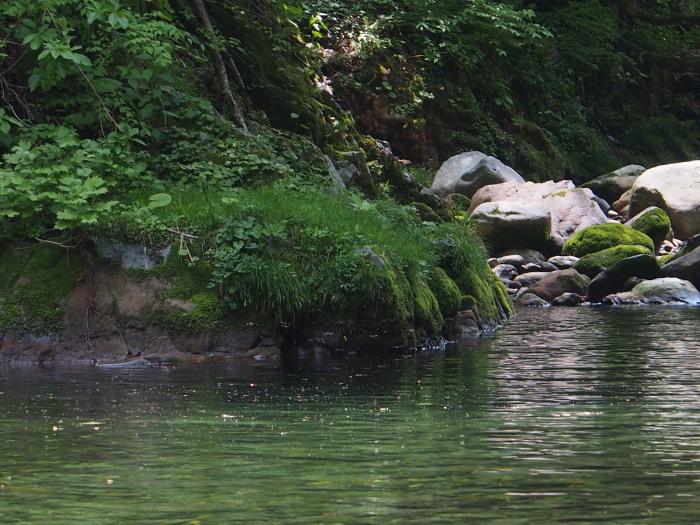 2018  庄川釣行、ライズを釣りあがる。_c0197578_09060907.jpg