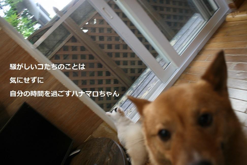 犬もへっちゃら!_f0242002_18291455.jpg
