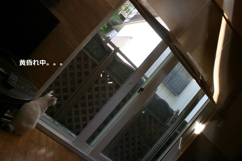犬もへっちゃら!_f0242002_18292026.jpg
