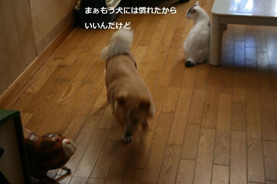 犬もへっちゃら!_f0242002_18294546.jpg