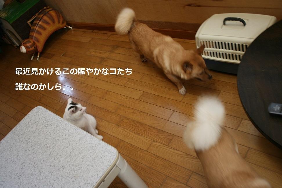 犬もへっちゃら!_f0242002_18295313.jpg