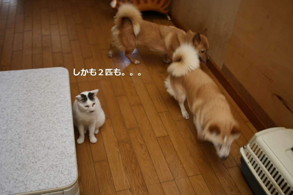 犬もへっちゃら!_f0242002_18300299.jpg
