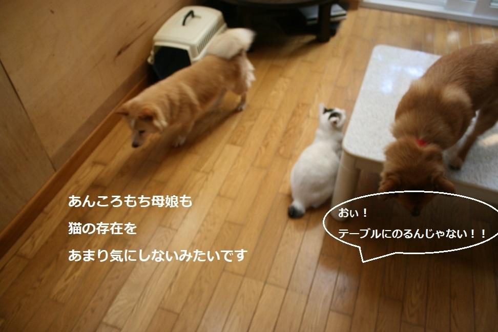 犬もへっちゃら!_f0242002_18301535.jpg